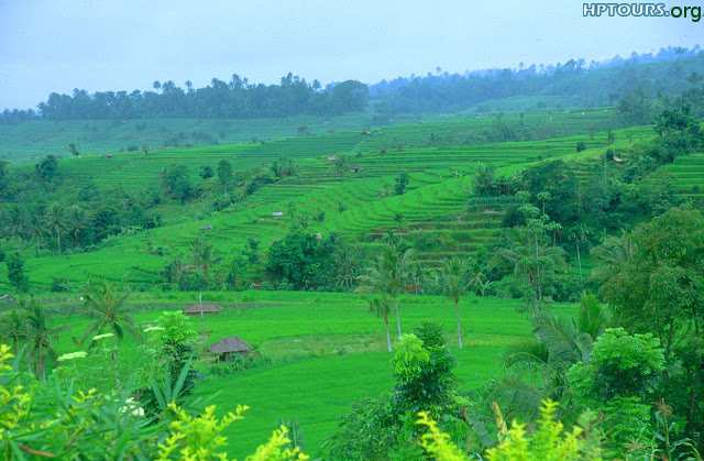 Greenery filled to the brim in Gada Gushaini